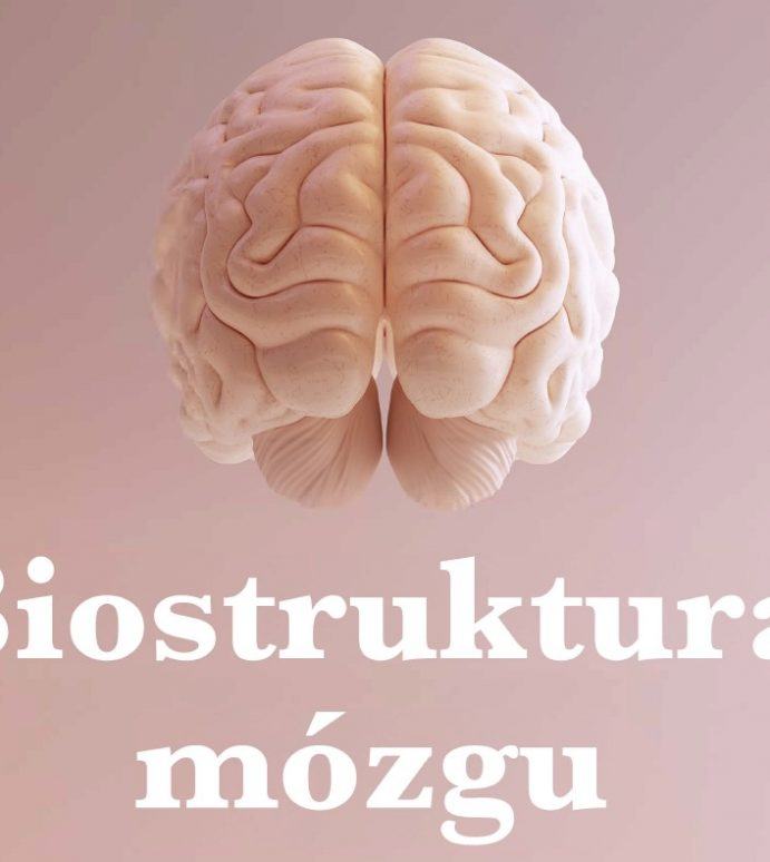 Biostructure of brain-management in business