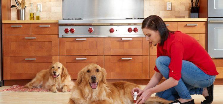 Nowe umiejętności właścicieli zwierząt